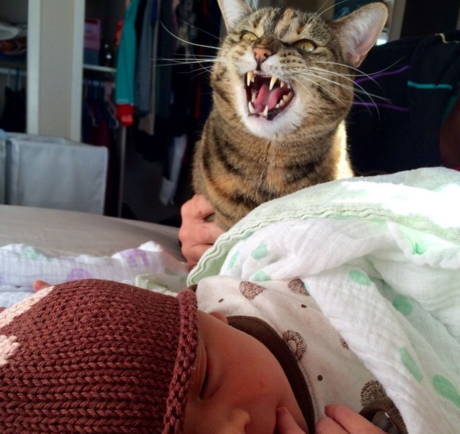 cat hissing at newborn baby