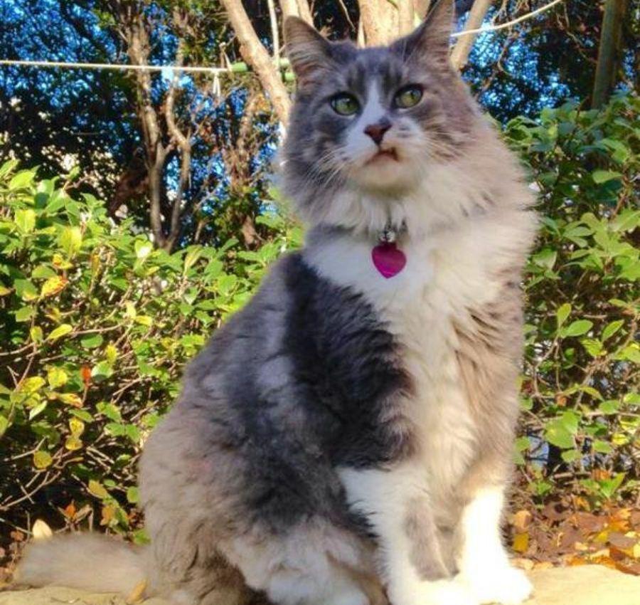 fluffy cat sitting on wall giving side-eye