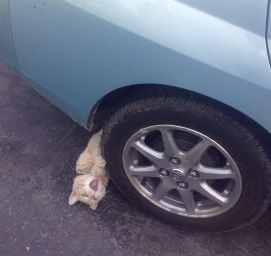 cat crawling out from underneath car tire while meowing