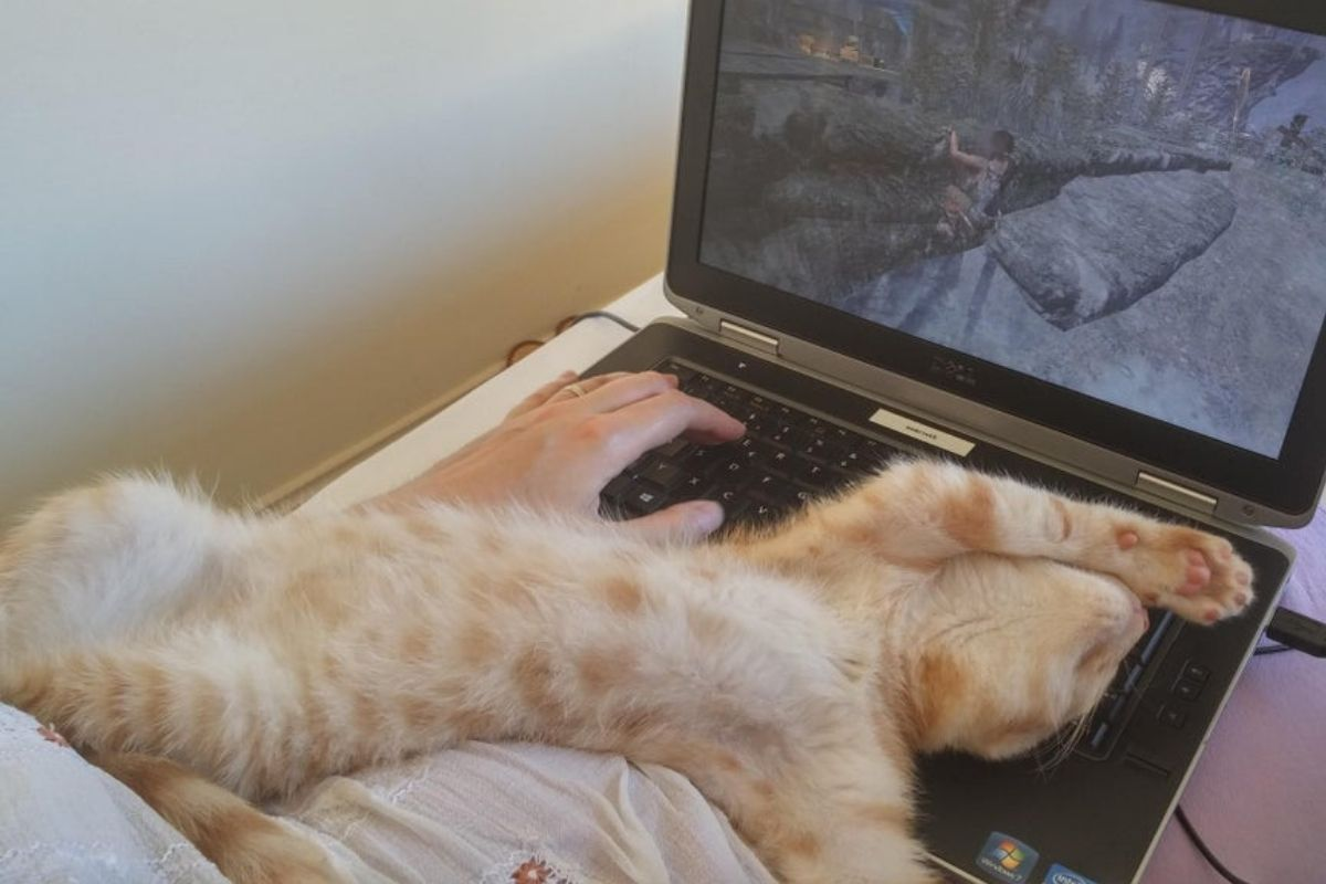 cat laying on back on top of laptop keyboard