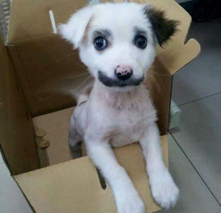 mustache-pup