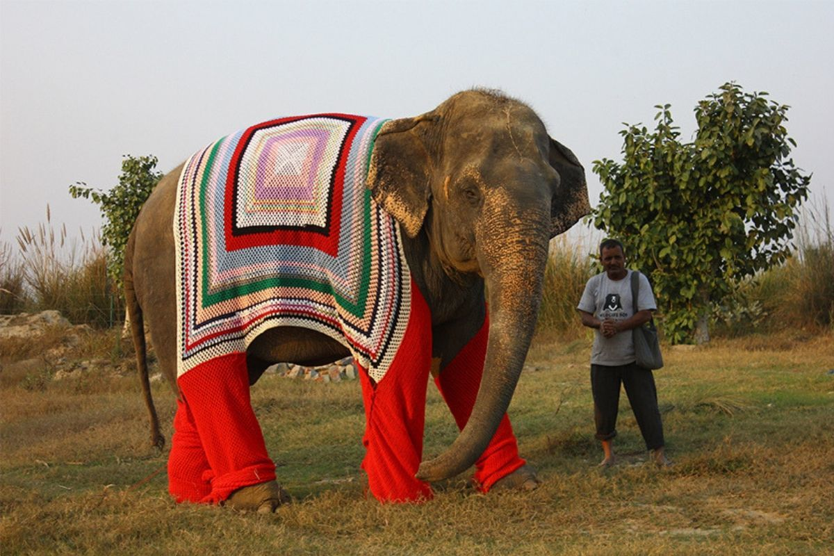 Rescued elephant