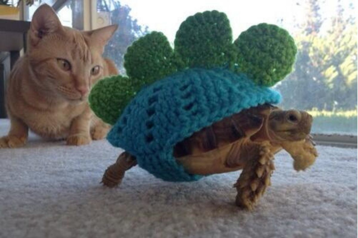 turtle walking in front of cat with knitted shell