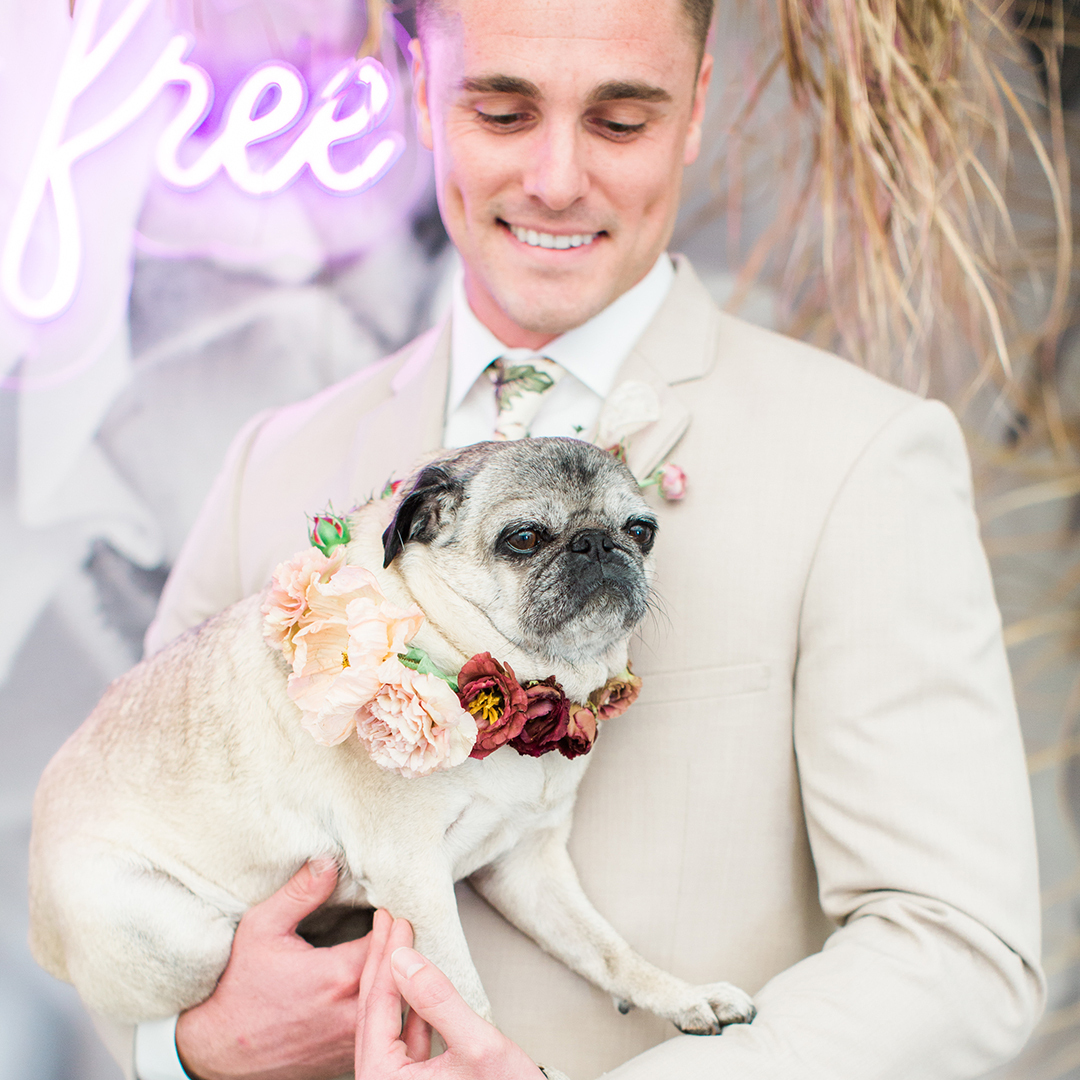 a groom and his pug