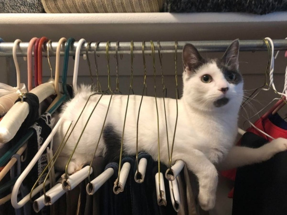 cat chillin on a hanger in closet