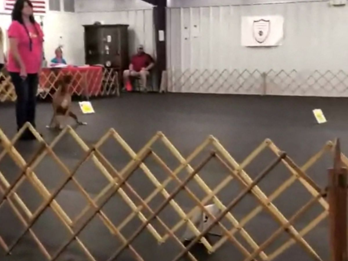 dog at an obediance class being wild