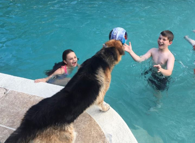 Haus, Molly, and Joey playing in the DeLuca pool