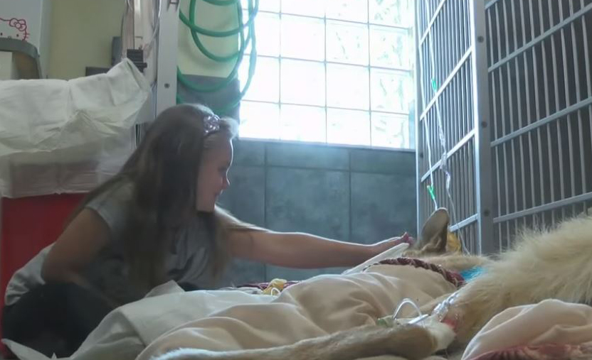 Seven-year-old Molly DeLuca pets Haus while he's in critical care