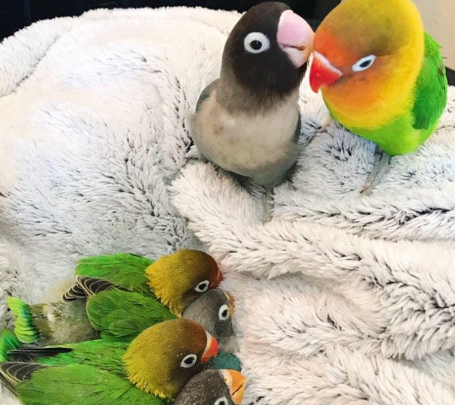 mom and dad birds pastel goth