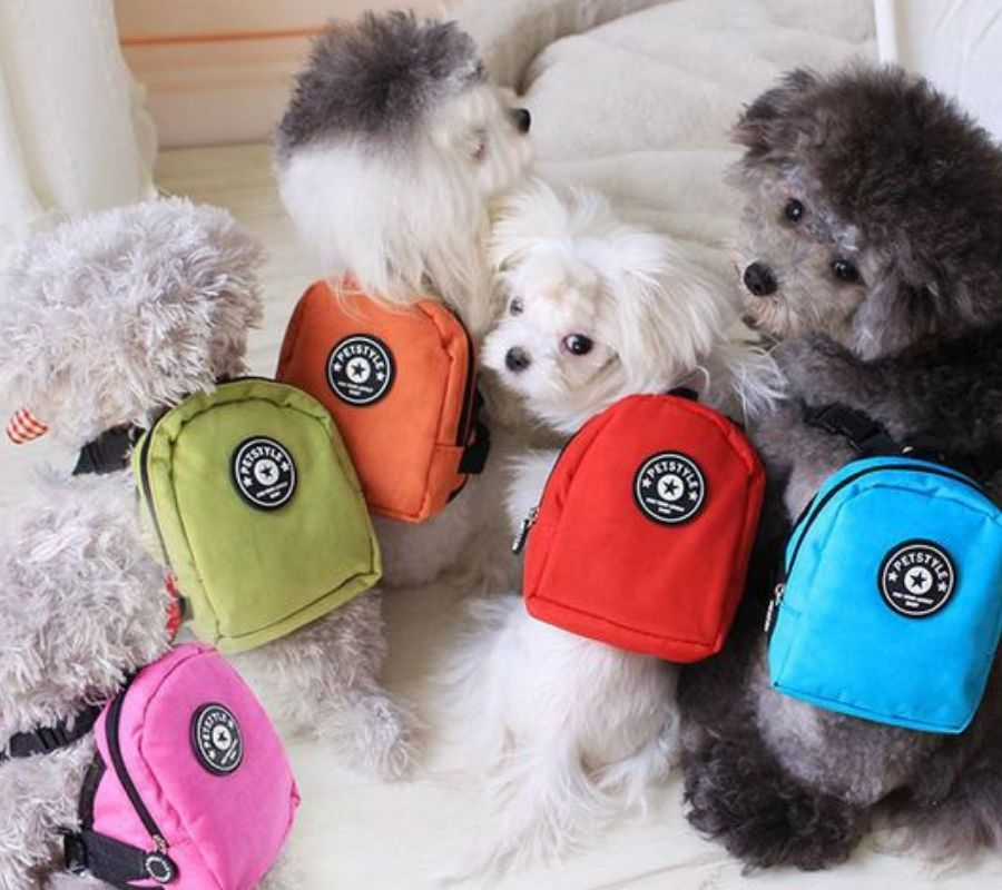 poodles wearing multicolored backpacks