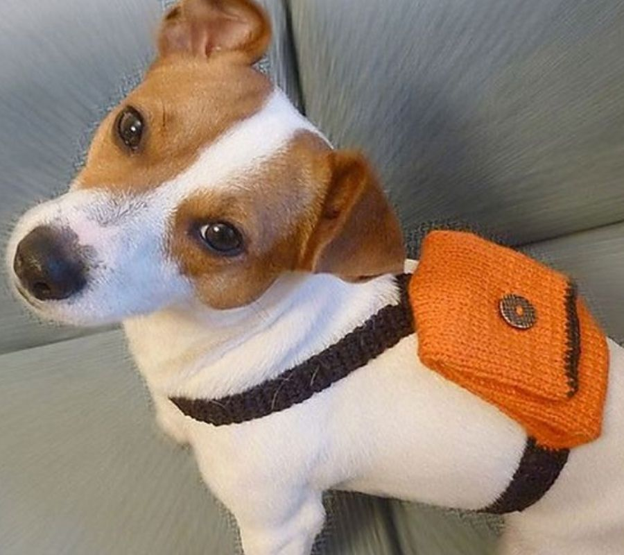 dog wearing an orange backpack looking at camera