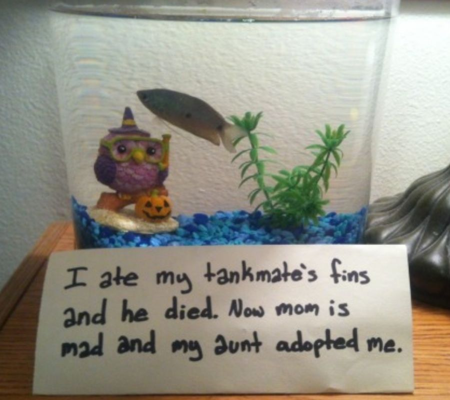fish in tank with a jacko lantern