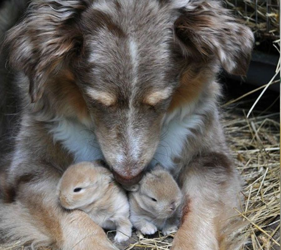 dog with little tiny rabbits