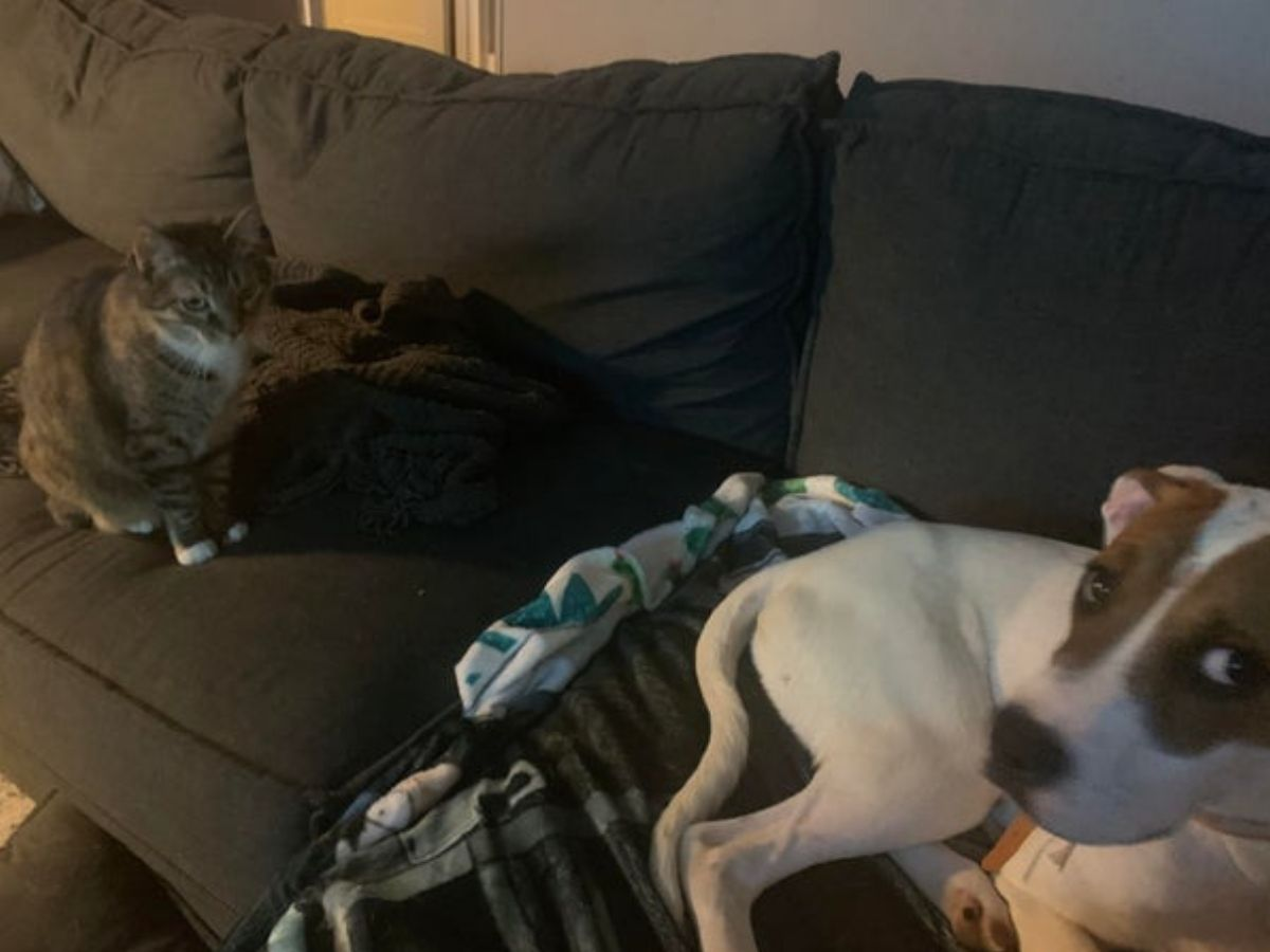 dog and cat chilling on the couch