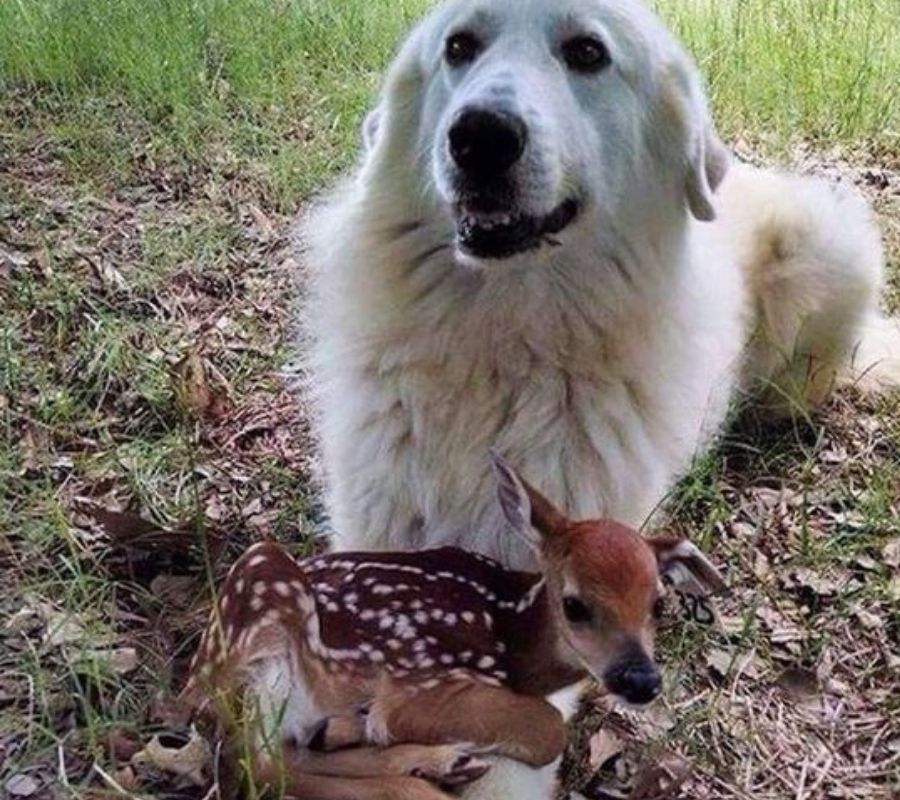 dog and baby doe perched on his lap