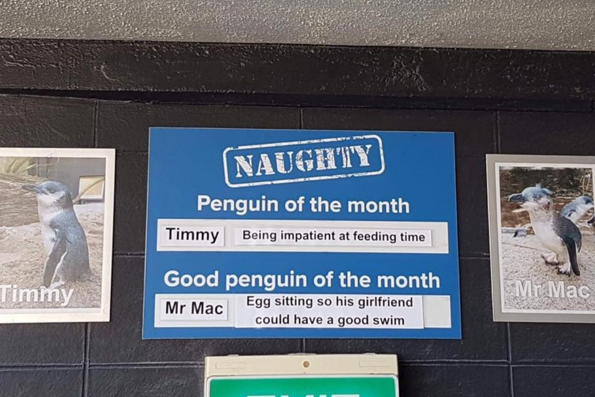timmy and mac penguins
