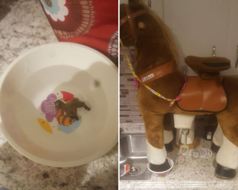 grow a pony goes from bowl to full size