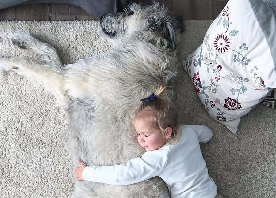 baby hugging large wolfhound