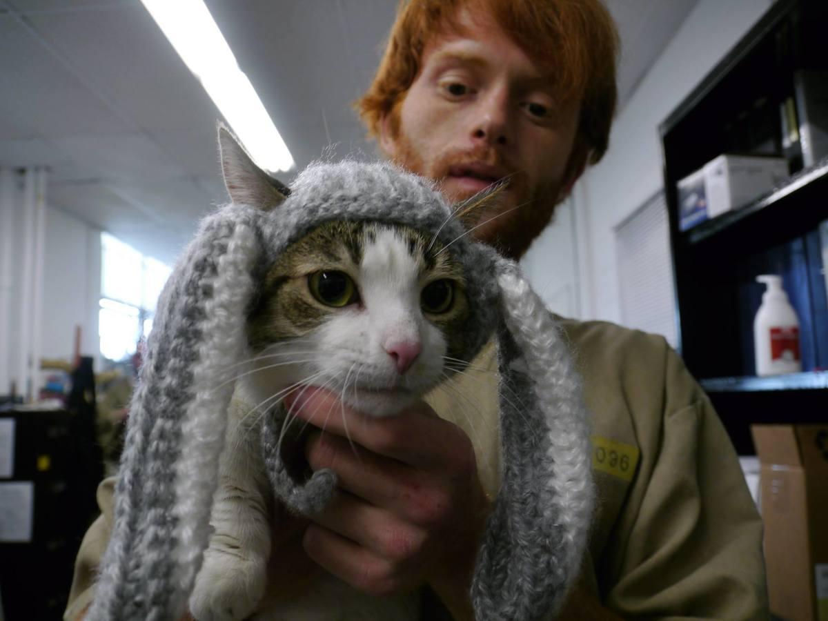 kitty 26