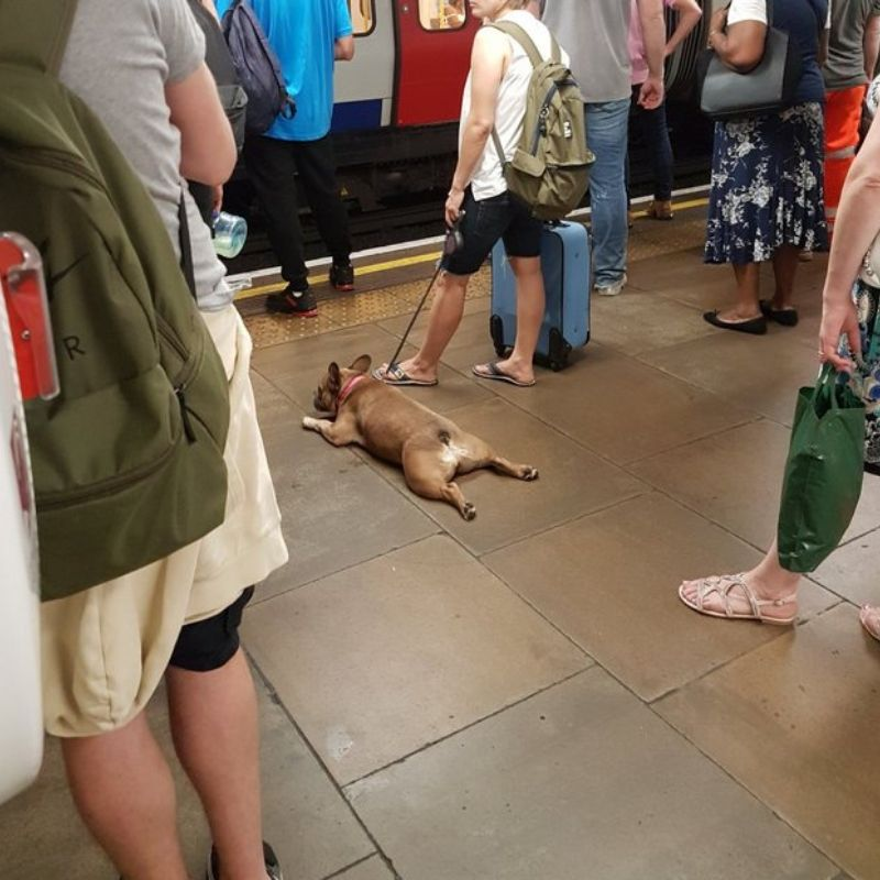 dog lying down waiting for subway
