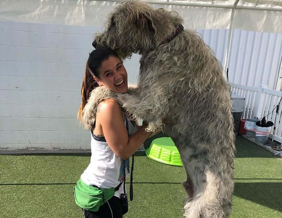 a dog that is taller than his owner