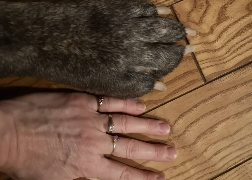 human hand and paw comparison
