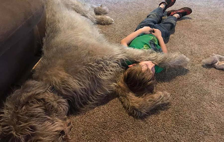 boy sleeping with wolfhound