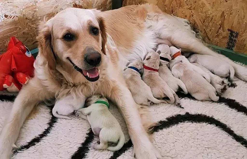 Mom with all her pups
