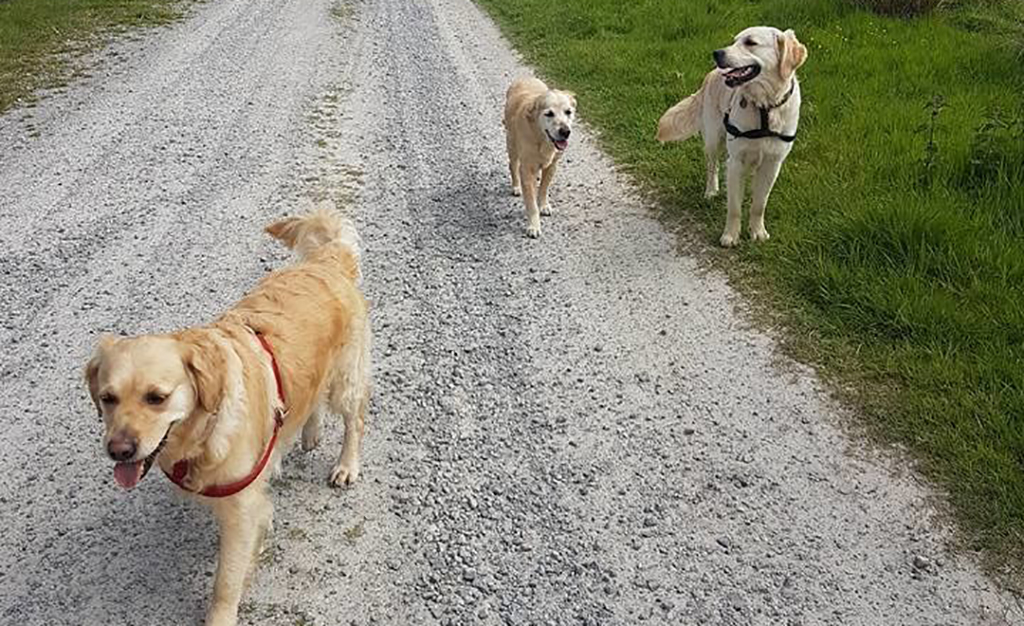 Three dogs on the road