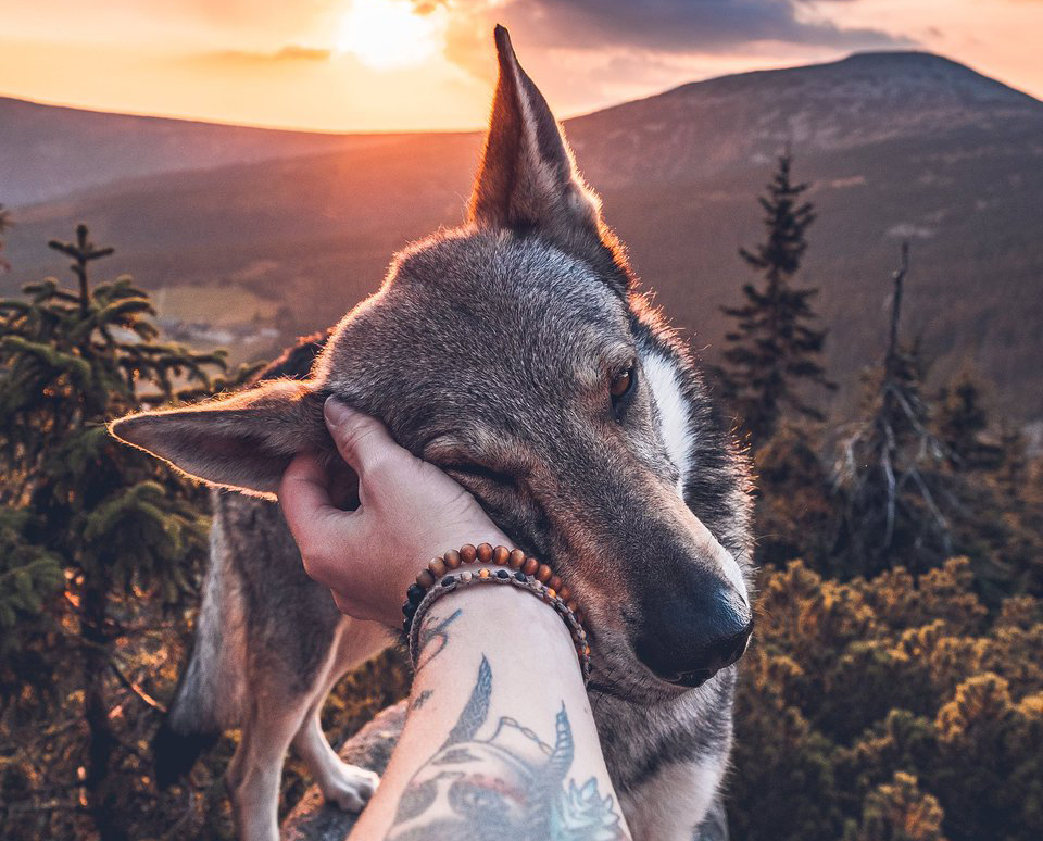 Czech photographer captures his travels with his Czech Wolfdog Sitka