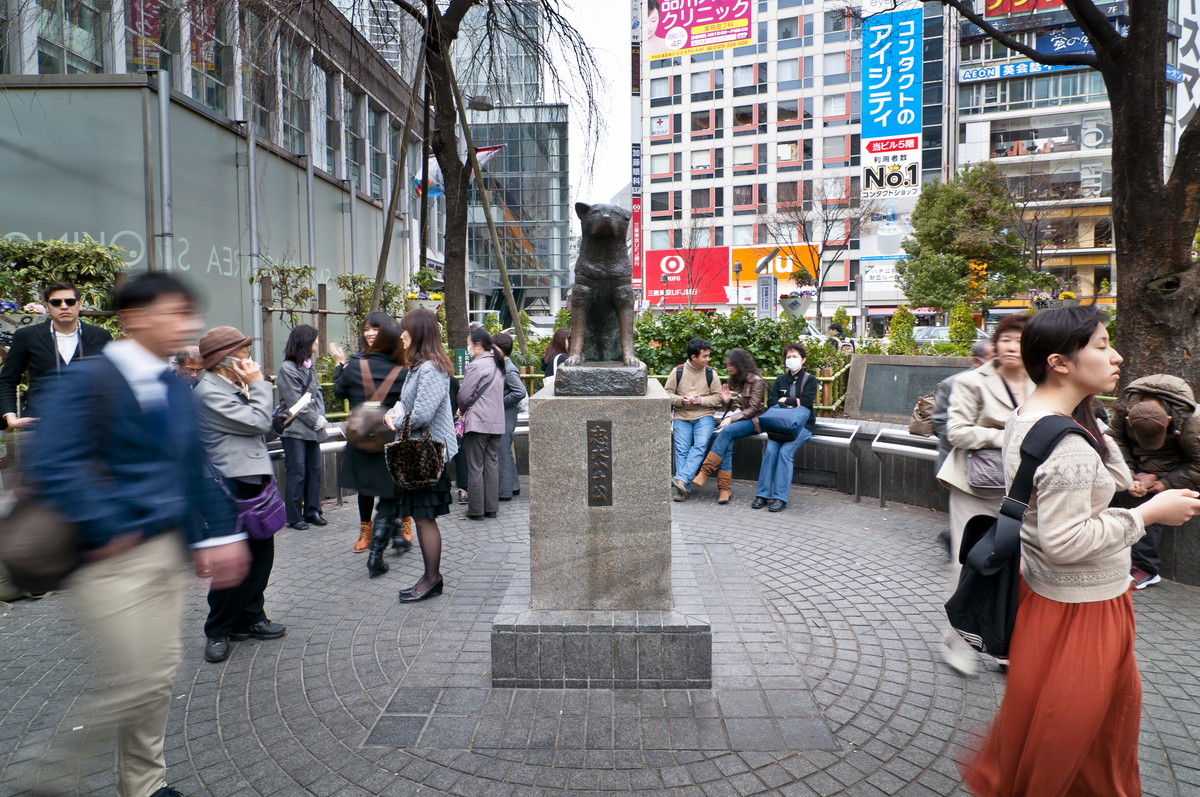 Hachi statues in Shibuya station