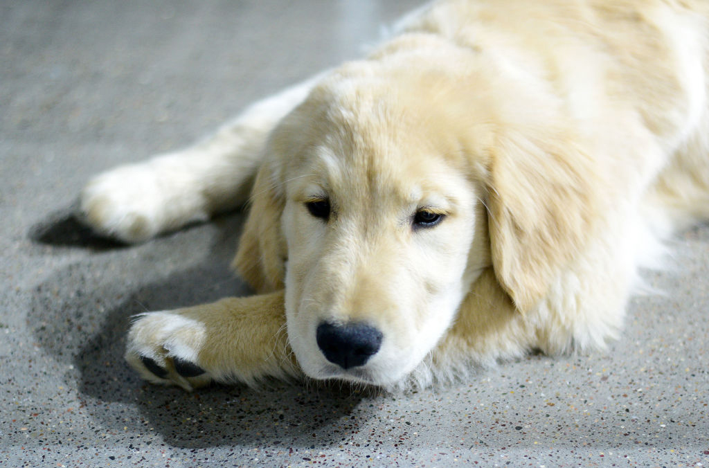 Puppy laying on the ground
