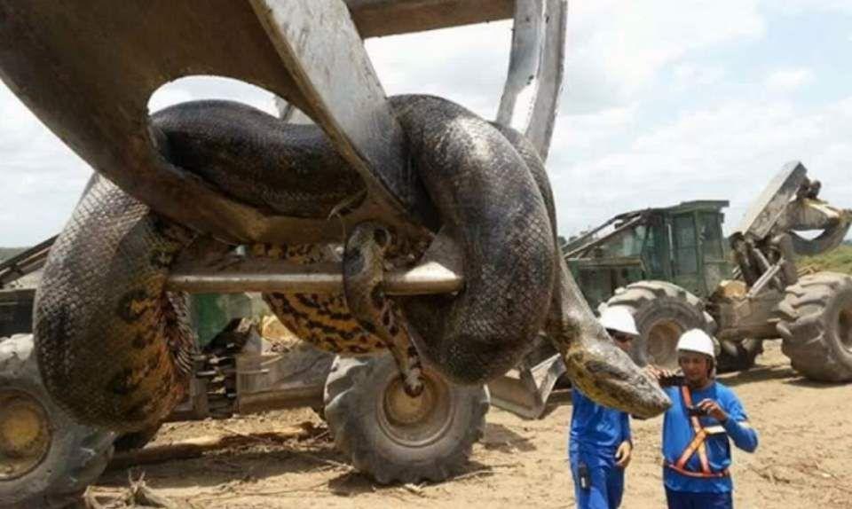 Anaconda don't want none...