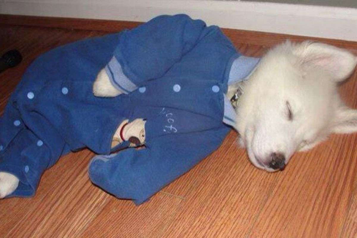 dog in pyjamas