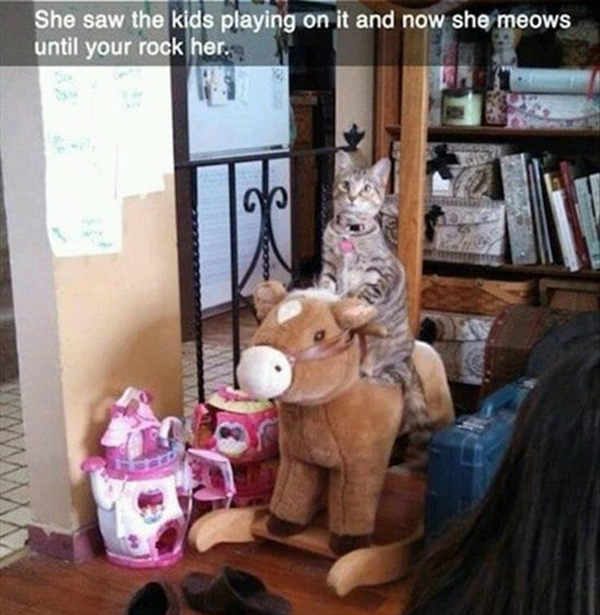 animal-snapchats-rocking-horse-cat
