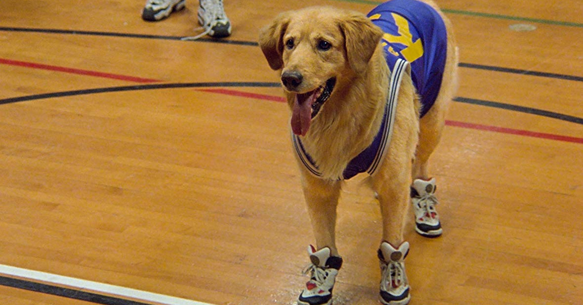 buddy the dog in a basketball outfit