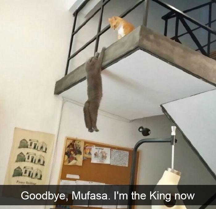 cat-snapchat-lion-king