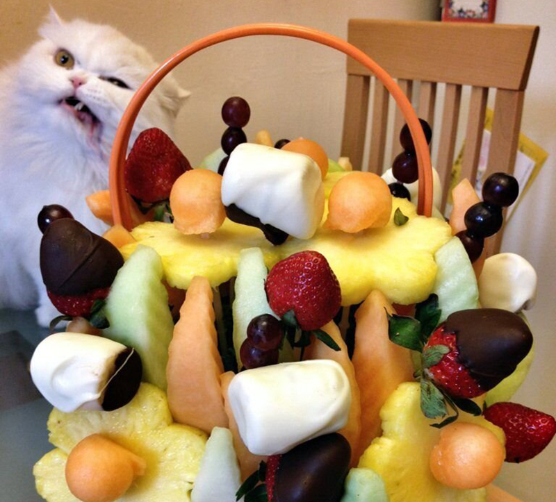cat_fruit_Jodie_Ann_Flanary-60314