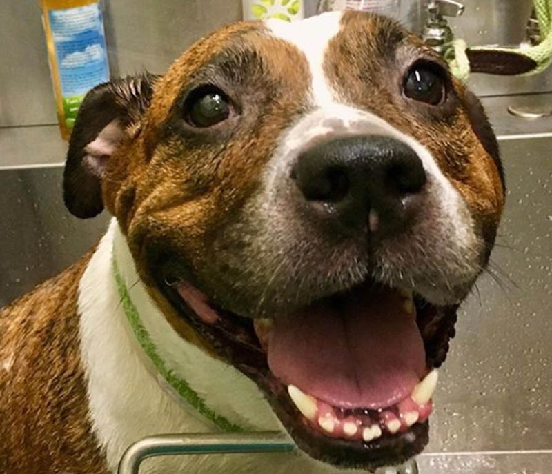 dog getting medicated bath at groomers in shelter