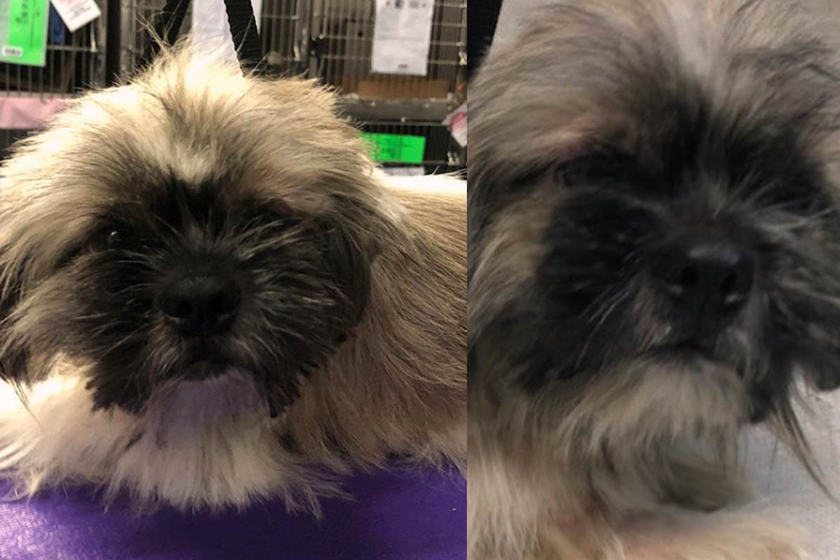 dog grooming transformation what a difference!