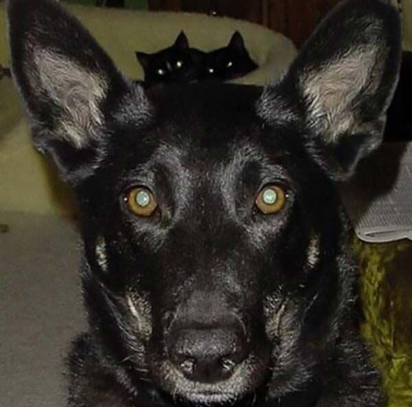 dog_and_cat_Team_Jummy_Joe-68131