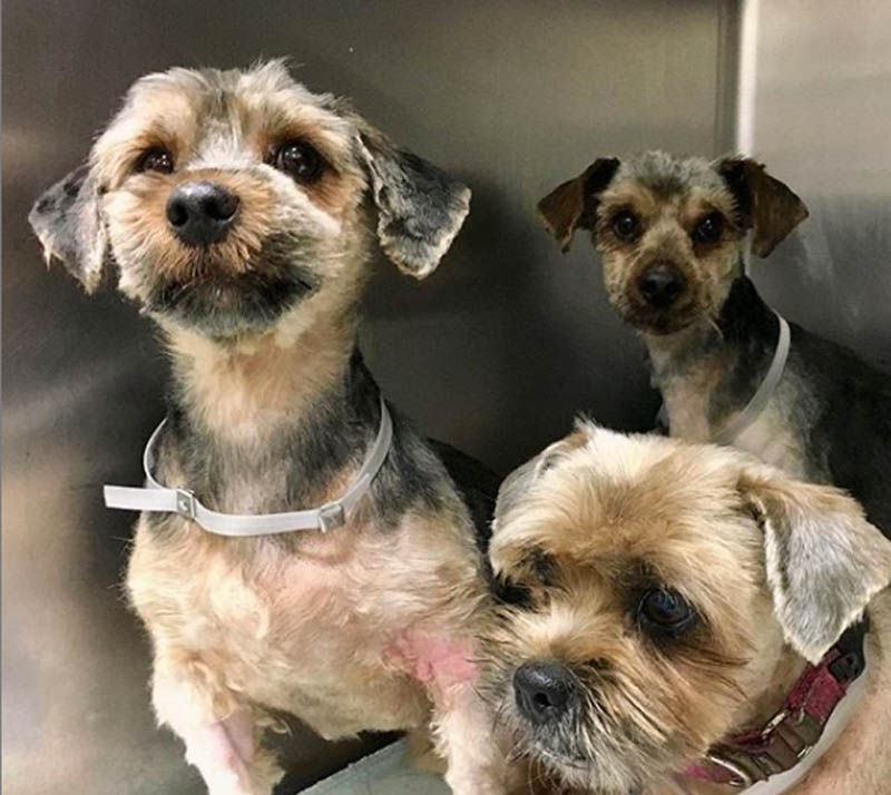 dogs reunited after grooming with their owner