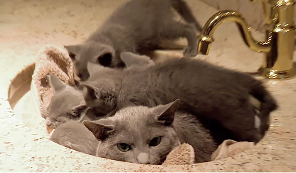 Cat and kittens in sink