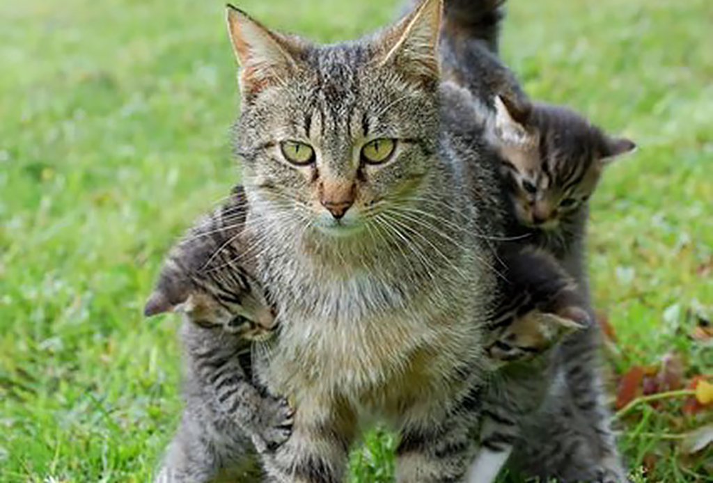 Kittens holding onto their mom