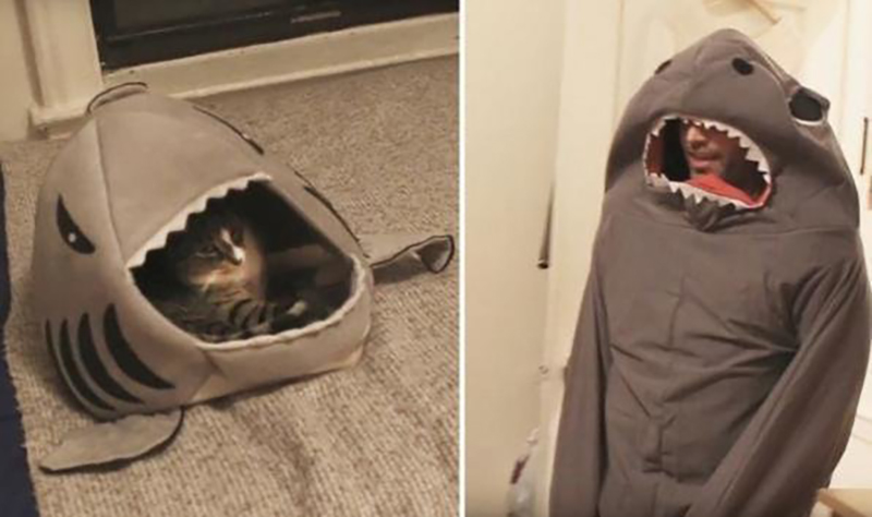 A cat lays in its shark bed while watching its owner in a shark costume