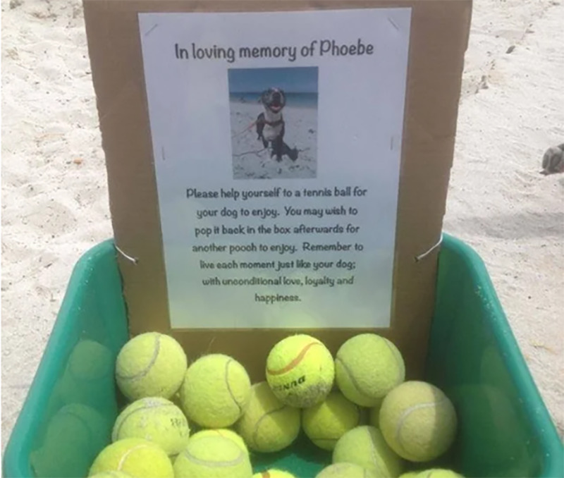 A bucket of tennis balls lies out with a sign that indicates the balls are meant to be shared in memory of the dog Phoebe