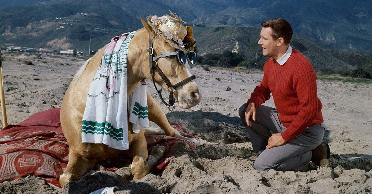 a horse dressed up for the beach with a man in a red sweater