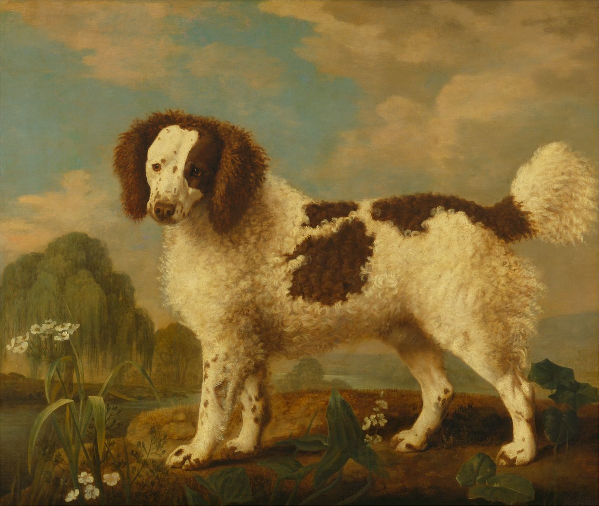 George Stubbs, 1724-1806, British, Brown and White Norfolk or Water Spaniel