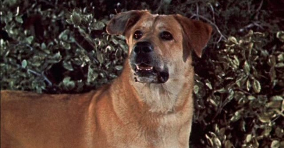 spike the dog in old yeller