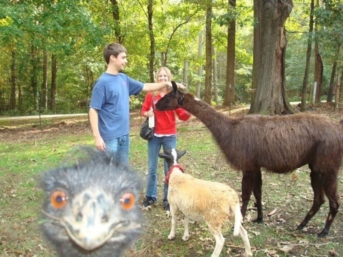 ostrich in the way